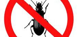 Chafer Beetle Control